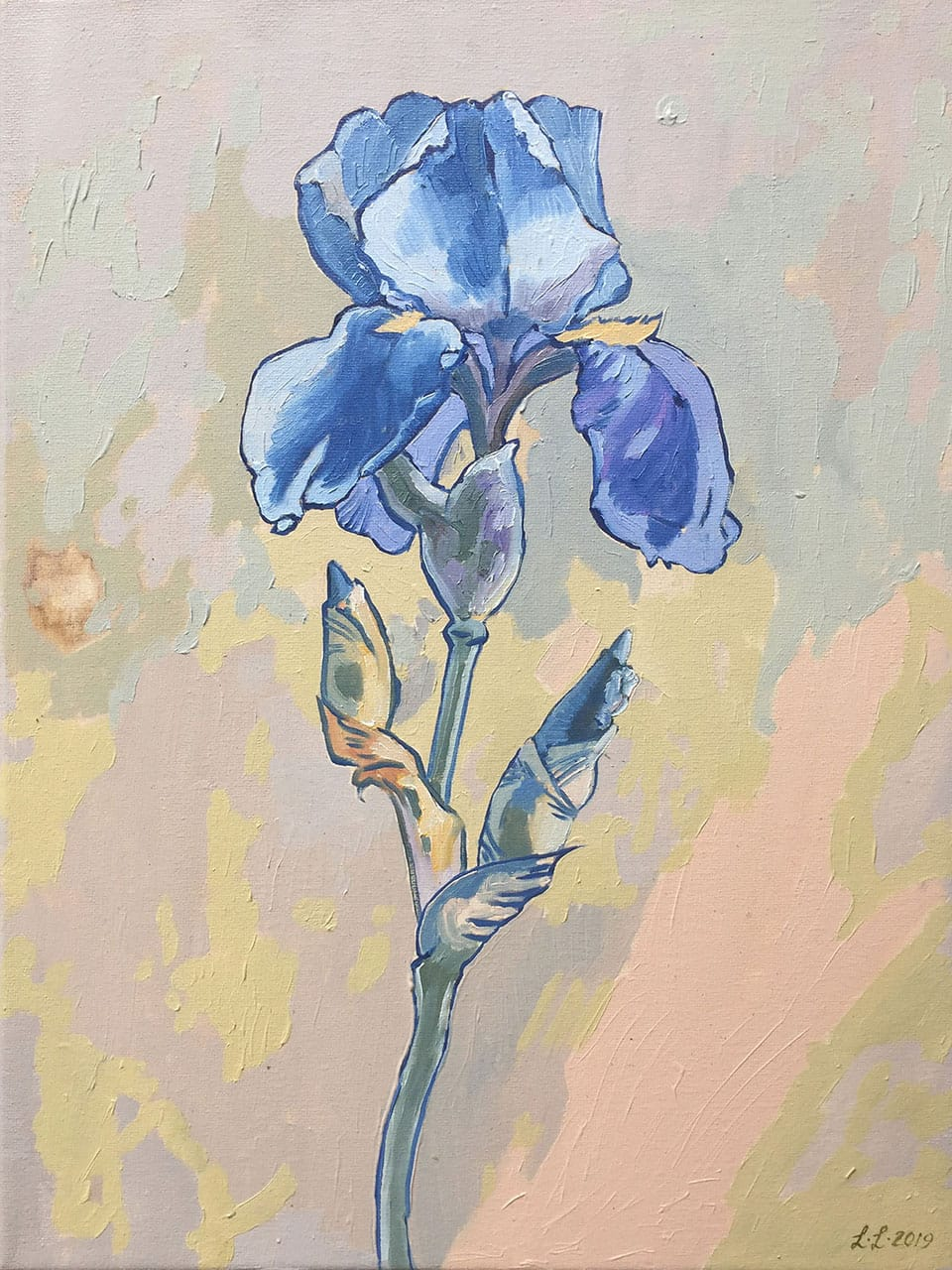 Iris, oil on canvas, 16x12inches